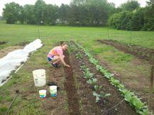 Jasmine Planting