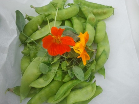 Beautiful peas getting ready for the share.